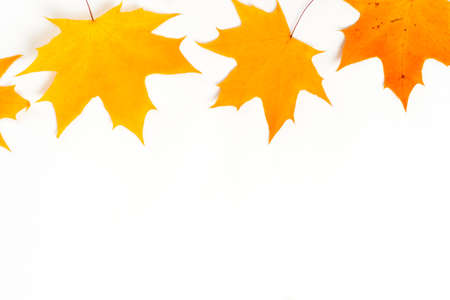 Autumn composition, maple leaves, top view, flat lay. Border made from color falling maple leaves Banco de Imagens