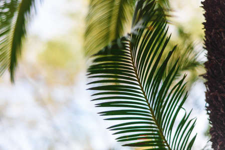 Tropical palm plant, green nature or save environmental concept. Stock fotó - 129843796