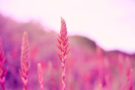 beautiful floral background purple lilac soft colors concept daydreaming, nostalgia