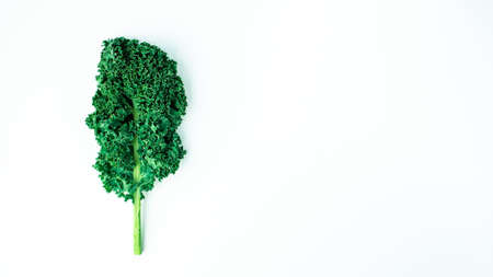 kale pattern on a white background, top view