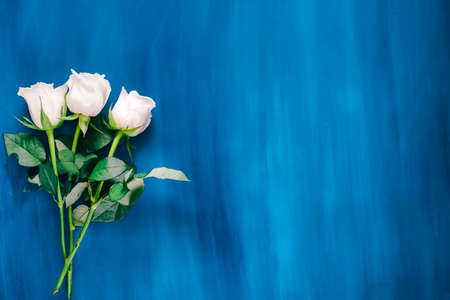 white roses flat lay on a classic blue background Reklamní fotografie