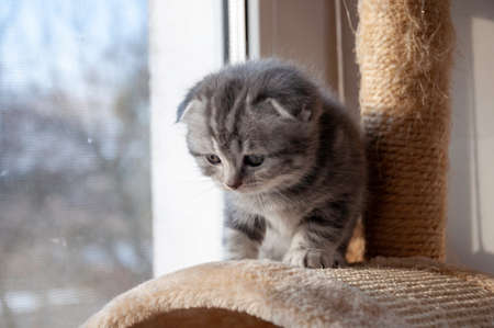 scared, uncertain kitten takes the first steps Stockfoto