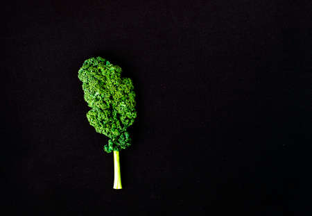 Creative layout made of curly kale leaf on colorful background. Flat lay. Food concept. Stock fotó