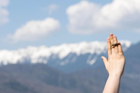 lizard in field: Paisaje de las monta�as con el primer plano la mano