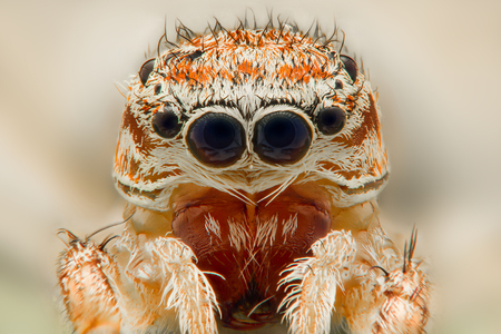common vision: Extreme closeup of a Jumping Spider