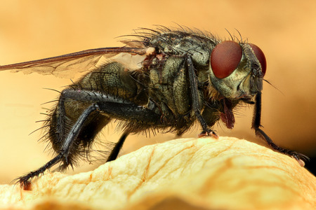 red hair: Extreme magnification - Fly, full body