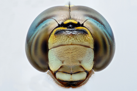 compound eyes: Extreme closeup of a Dragonfly head - front view