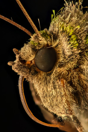 magnification: Extreme magnification - Moth head - side view