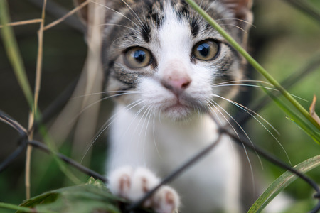 Sad kitten beyond the fence