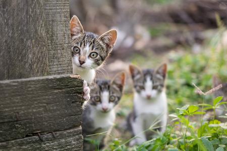 Curious but shy kittens Standard-Bild