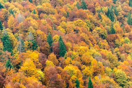 autumn colour: Top view of colourful forest trees in the autumn season