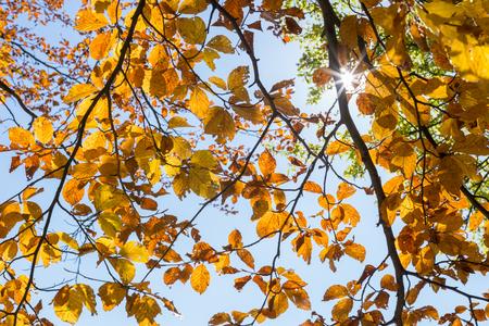 scenic  landscape: Autumn Leafs Stock Photo