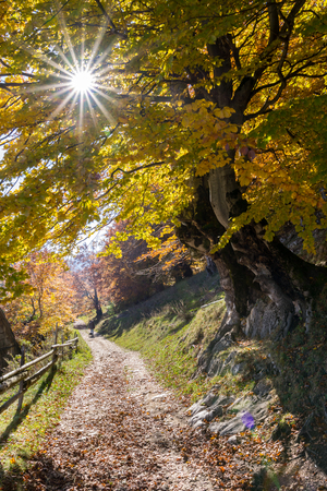 dirt road recreation: Autumn sun through autumn leaves with forest background