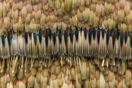high scale magnification: Extreme magnification - Moth and butterfly wing