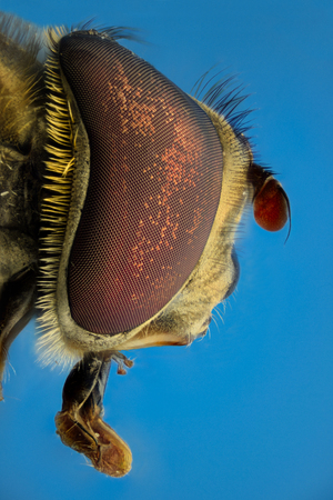 compound eyes: Extreme magnification, Fake bee, side view Stock Photo
