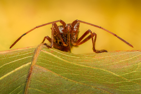 magnification: Extreme magnification - Stink Bug on a leaf Stock Photo