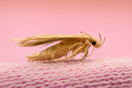 magnification: Extreme magnification - Moth on cloth