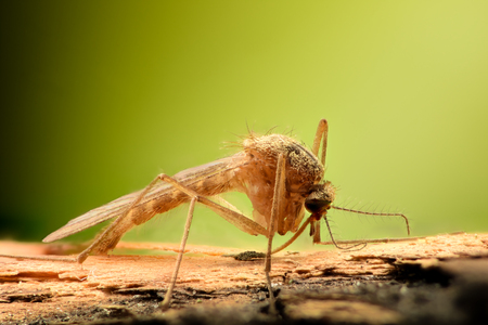 Extreme magnification - Mosquito on a branch