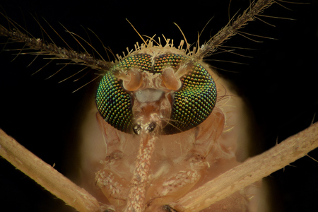 Extreme magnification - Mosquito head, front view 스톡 콘텐츠