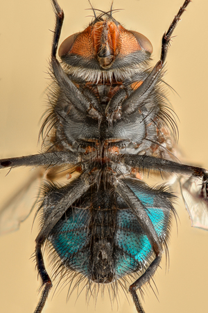magnification: Extreme magnification - Fly body, from underneath Stock Photo