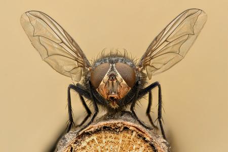 mosca: ampliación extrema - Fly despegue