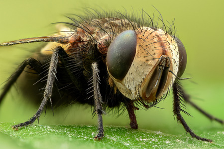 Extreme magnification - Fly on a leaf, side view