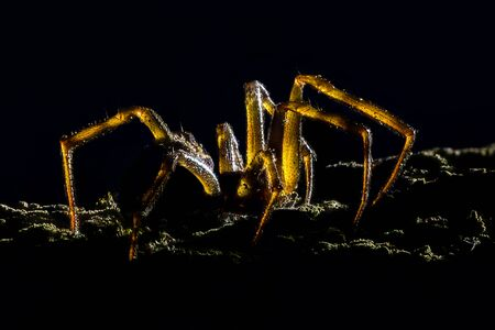 magnification: Extreme magnification - Creepy spider, backlit