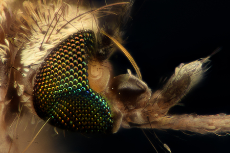 magnification: Extreme magnification - Mosquito head, side view