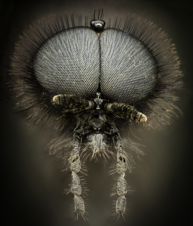 compound eyes: Extreme magnification - Black wasp portrait Stock Photo