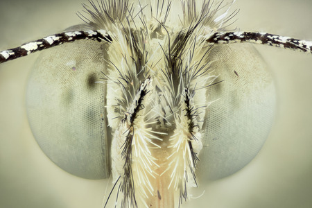 focus stacking: Extreme magnification -  Butterfly head, front view Stock Photo