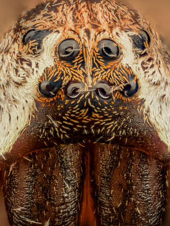 magnification: Extreme magnification - Spider eyes, arrangement