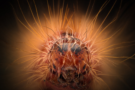 Extreme magnification - Red Caterpillar head