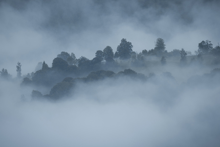 treetops: Treetops on a hill surrounded by fog