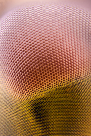 Extreme magnification - Dragonfly compound eye texture