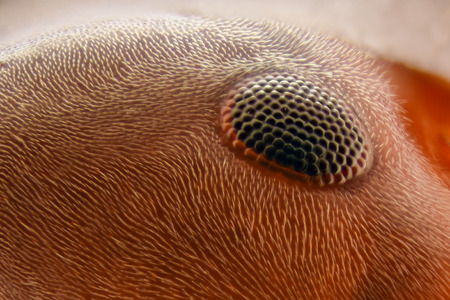 magnification: Extreme magnification - Ant eye
