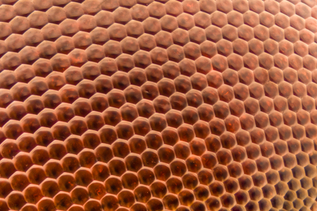 compound eyes: Extreme magnification - Dragonfly compound eye texture at 20x