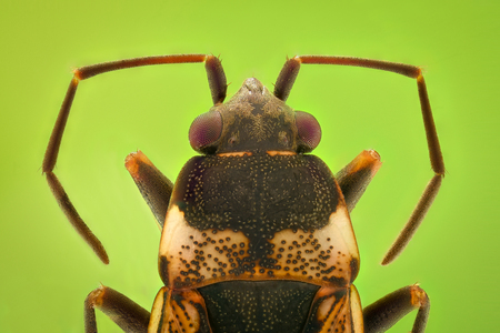 Extreme magnification - Top view of a small bug