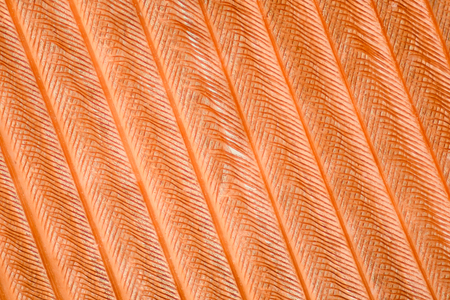 Extreme magnification - Feather detail