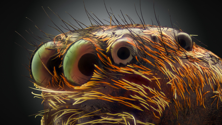 Extreme magnification - Jumping spider portrait, side view Stock Photo