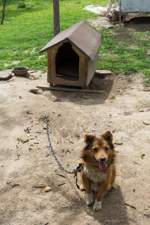 maltrato: Young guard sentry dog sits on a chain near his dog house Foto de archivo