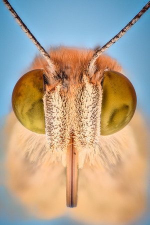 Extreme magnification - Butterfly head