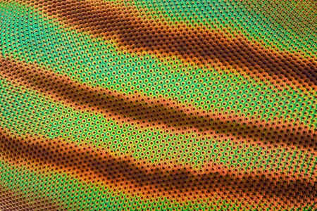 Extreme magnification - Horse fly compound eye under the microscope