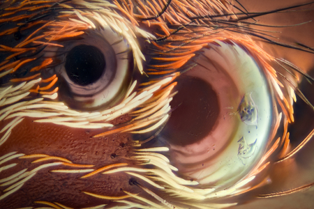 Extreme magnification - Jumping spider eyes at 20x Stock Photo