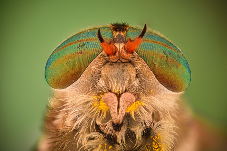 Extreme magnification - Horse fly head and eyes, Hybomitra Stock Photo