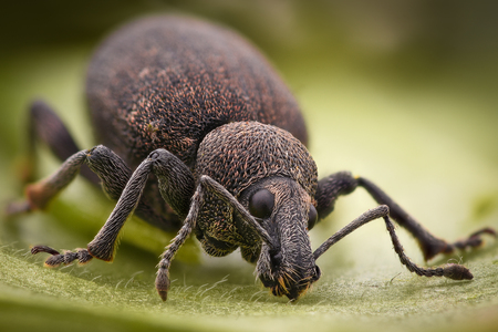 Extreme magnification - Weevil Stock Photo