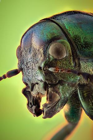 Anatomie Einer Rose Käfer Makro Nahaufnahme Lizenzfreie Fotos ...