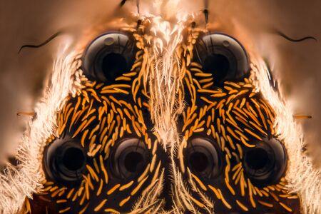 heteropodidae: Extreme magnification - Huntsman spider Stock Photo