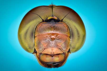 magnification: Extreme magnification - Dragonfly Head