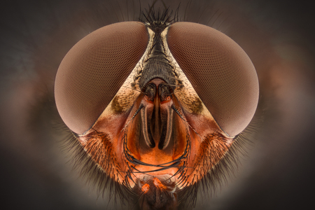 detailed shot: Extreme magnification - Fly head, front view