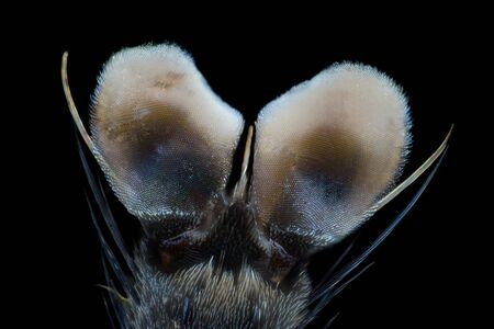 Extreme magnification - Fly paw at microscope, 50x magnification